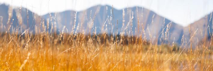 Weitsee-Gräser
