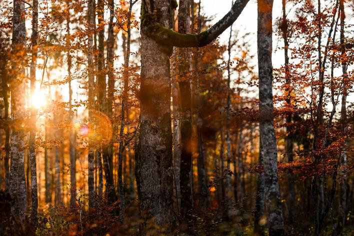 Wald Pano 2